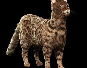 Bengal cat 3D