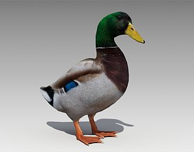 Mallard Duck 3D asset animated