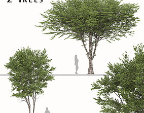 Set of Celtis australis or European nettle Tree - 2 3D