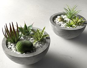 3D Bowl Planters with Cactus and Succulents