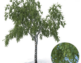 Birch Tree No 3 Summer Version 3D