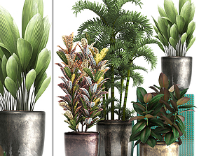Collection Exotic plants 353 3D model