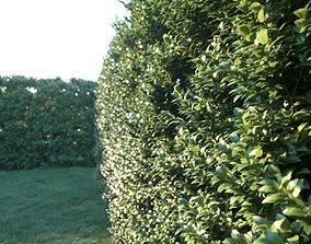 HEDGES Ficus annulata 3D model