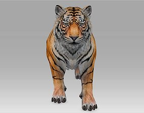 3D Tiger Realistic Character with motion