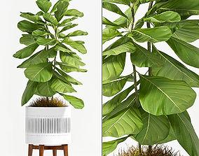 Decorative plant set-50 3D model