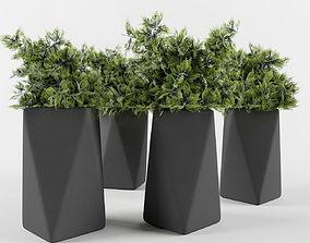 Juniper in a pot 3D model