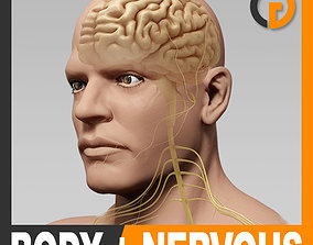 Human Male Body and Nervous System - Anatomy 3D model