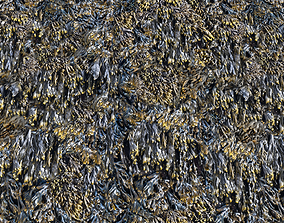 Seaweed textures PBR 3D