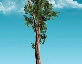 Sequoia Tree Red Wood 3D asset