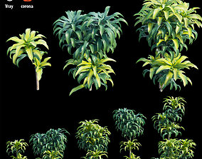 Dracaena Corn Plant 3D model