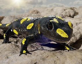 VR / AR ready Salamander 3D model