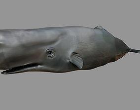 Sperm whale Rigged 3D asset