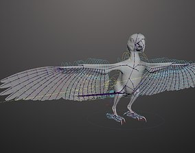 3D rigged Basic model with Animation RIG of Macaw
