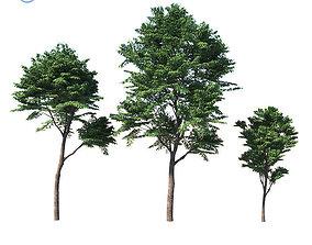 Fraxinus excelsior 3D model