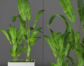 moss Banana palm 3D model