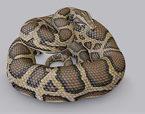 Rigged Burmese Python 3D model VR / AR ready
