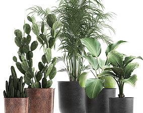 3D model Decorative plants in flowerpots 835