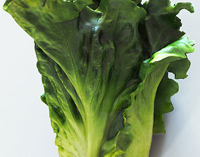 Lettuce high detail 3D model