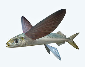 Atlantic Flying Fish 3D model