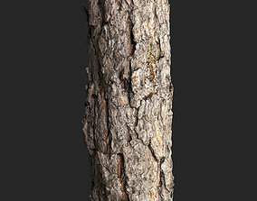 3D asset game-ready Piece of Pine Trunk Bark Scanned