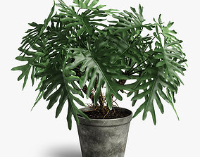 3D philodendron plant