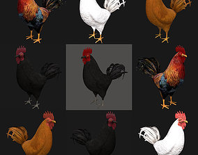 Different color Rooster hen collection 3D model