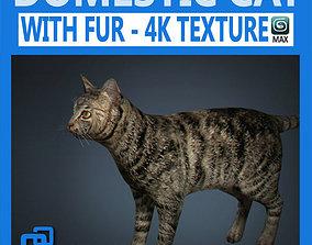 Domestic Cat with Fur 3D model