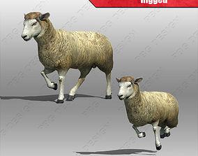 3D Sheep