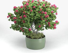 Rhododendron 3D
