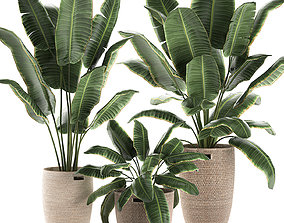 3D model Decorative banana palms in a basket for the 1