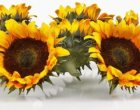3D model Sunflower Brown