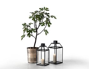 Lanterns and Planter with Fig Tree 3D model