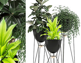 Plants collection 141 MADRE SELVA GRANDE 3D