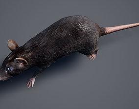 3D asset Rat LowPoly