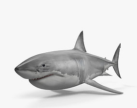 3D model Great White Shark HD