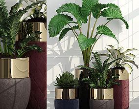 3D model plant 47 longhi godwin