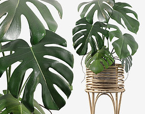 3D model leaf Monstera in rattan stand