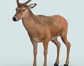 3D model Realistic Wollaton Deer
