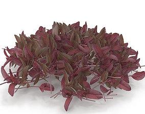 3D model Red amaranth PS