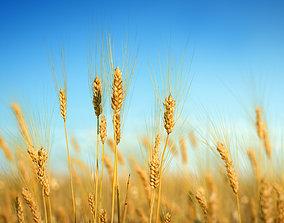 3D plant collection vol02 Barley grain PBR