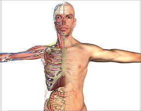 3D model Male Full Body Anatomy and Skin