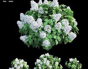 3D model Hydrangea Plant set 31