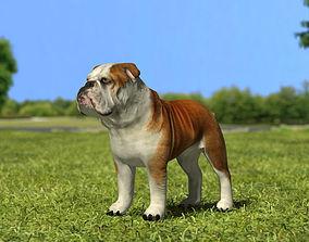 3D model Bulldog