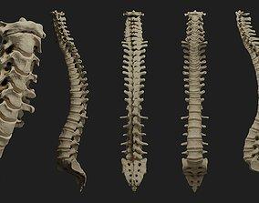 3D Human spine PBR