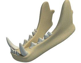 skull 3D Animal Lower Jaw Mandible