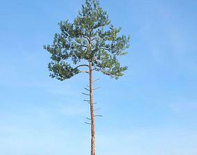 3D green Tall Green Tree