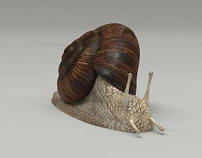 3D model Garden Snail - Cornu aspersum