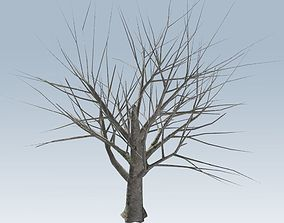 Tree without leaves 3D