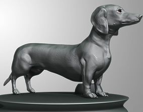 Detailed Dachshund Dog 3D model