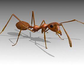 3D model Weaver Ant